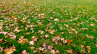 Dolly shot of leaves and grass in autumn video