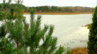 Dolly shot of pine tree with lake video
