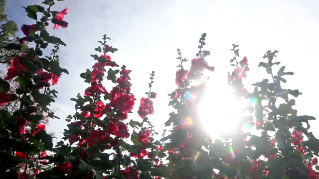 HD dolly shot:sunshine with flowers in the morning video