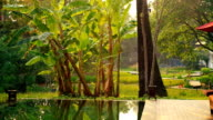 Dolly LS The beautiful Place with green garden reflecting swimming pool video