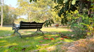 Dolly:Bench on a lawn area of the park. video