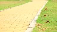 HD Dolly:brick walkway video