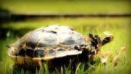 HD dolly:Dead turtle. video