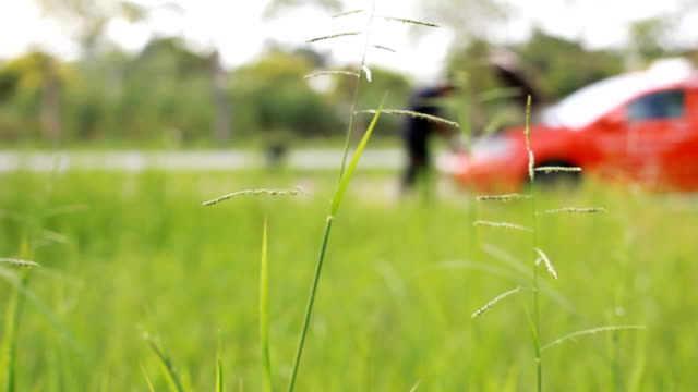 HD dolly:Grass flower on background Young man with car trouble. video