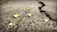 HD Dolly:Road cracks, Broken Asphalt. video