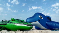 Dolphin and crocodile on the beach video