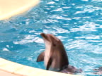 Dolphin in pool video