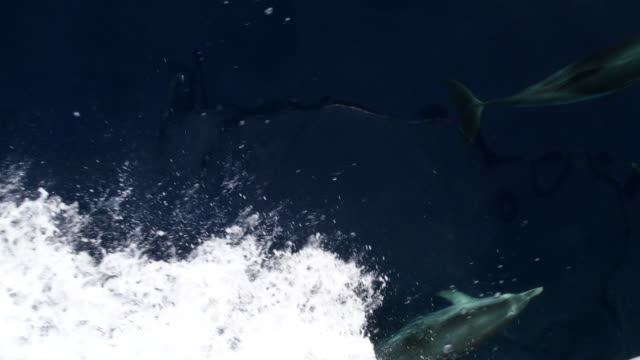 dolphin pod underwater slow motion video