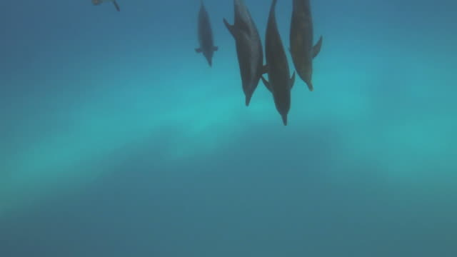 Dolphins video