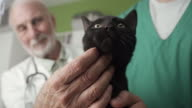 Domestic cat at veterinary clinic video