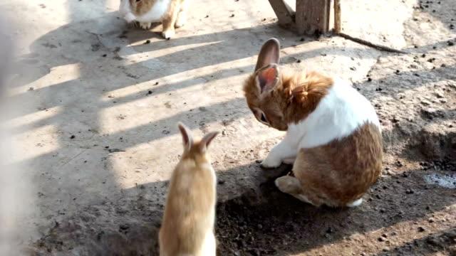 Domestic small rabbit farm. video