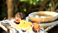Domestic Wildlife: Field mouse eating video