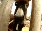Donkey Eating in Bethlehem video