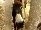 Donkey Eating video