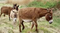 donkeys video