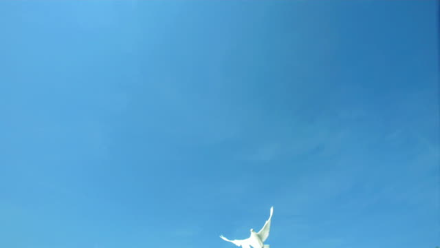 Dove Flying Across Blue Sky (Super Slow Motion) video