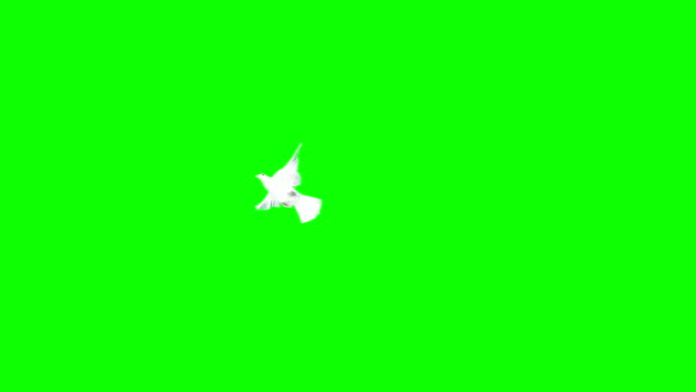 Dove Flying Over A Chroma Background (Super Slow Motion) video