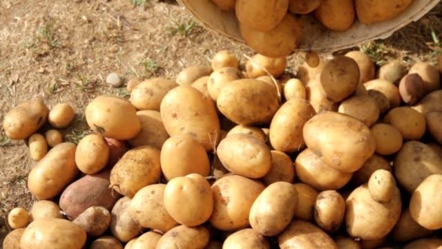 Downloading potatoes - Descargando patatas video
