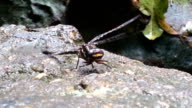 Dragonfly in a rain forest video