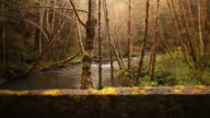 Dramatic Redwoods, river, bridge, dolly nature background video