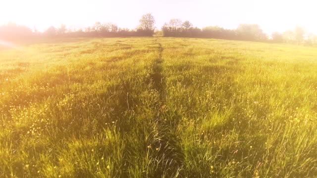 dreamy fields video