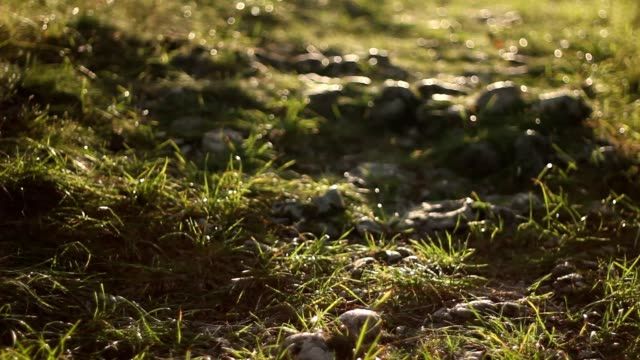 Dreamy light on a woods path video