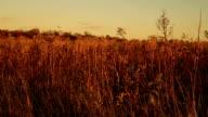 Dried grass video