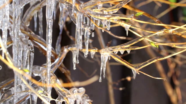 dripping icicles video