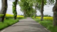 Driving a car through an avenue of trees video