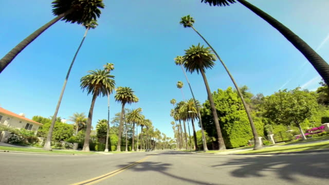 WS Driving Along Palm Tree-lined Road video