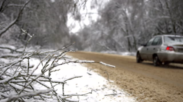 driving along road with fallen trees, after intense ice storm video
