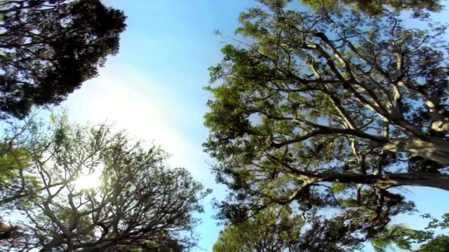 LA WS Driving Along Tree-lined Road video