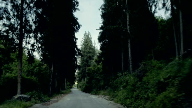 Driving at the forest road video
