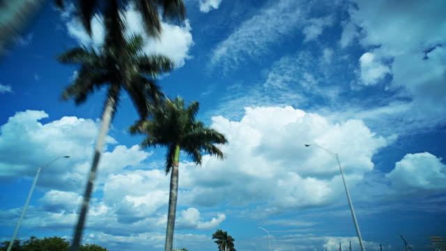 Driving below blue skies and palm trees video