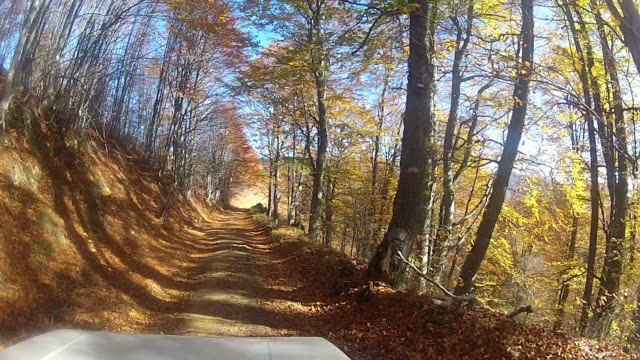 Driving slowly a Car on forest internal dirt Road video