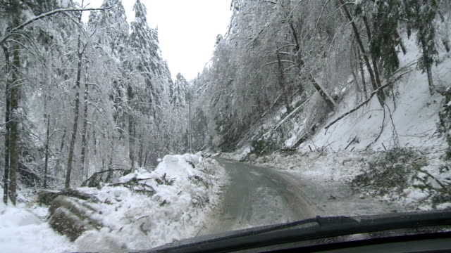 Driving Through A Forest After An Ice Storm video