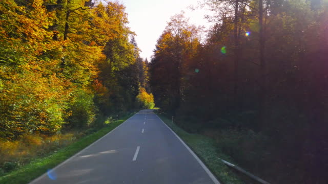 POV Driving Through Autumn Forest (UHD) video