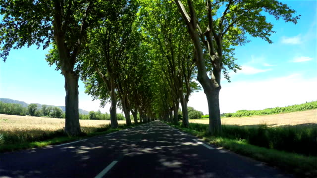 FPV: Driving through beautiful tree avenue in sunny spring video