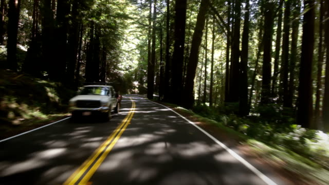 Driving through Redwood forest video