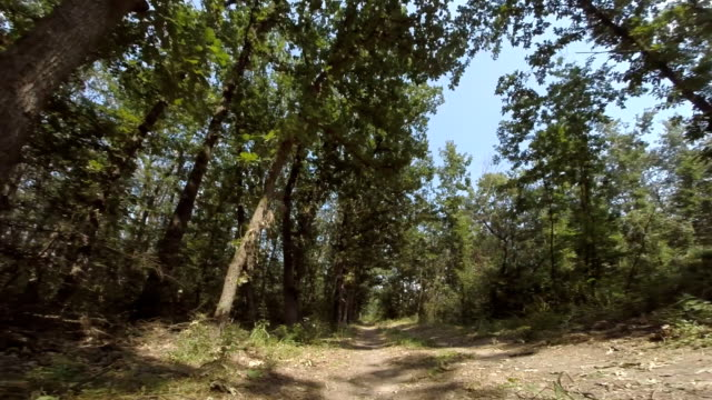 Driving Through the Woods. Personal Perspective video
