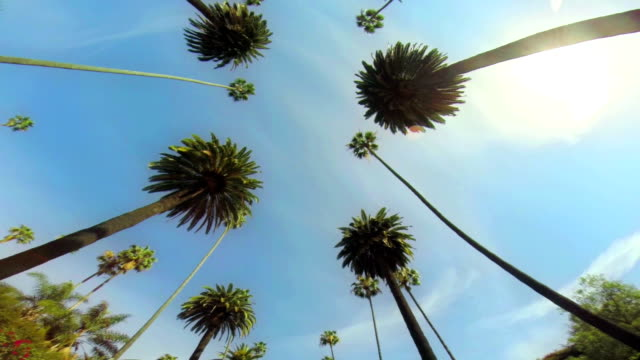 LA WS Driving Under Palm Trees video