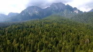 Drone flying over green forest in mountains video
