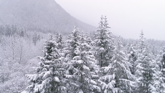 Drone in Snowy Mountain Forest Flying Down with Snow Flakes in Slow Motion video