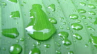 drops of dew on a green leaf close-up video