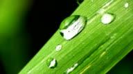 HD MACRO: Drops Of Dew video