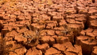 Drought disaster. video