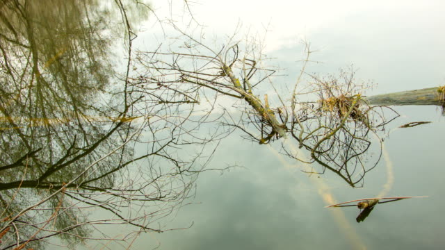 Dry branches on the water surface video