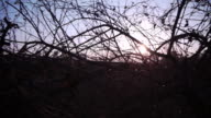 Dry branches video