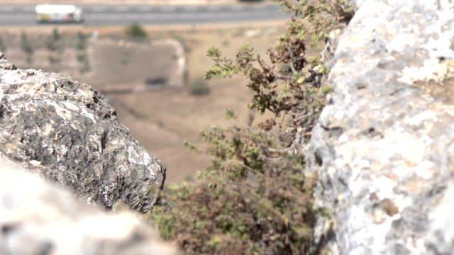 Dry Clump of Weeds Clinging to Side of Cliff in Israel video