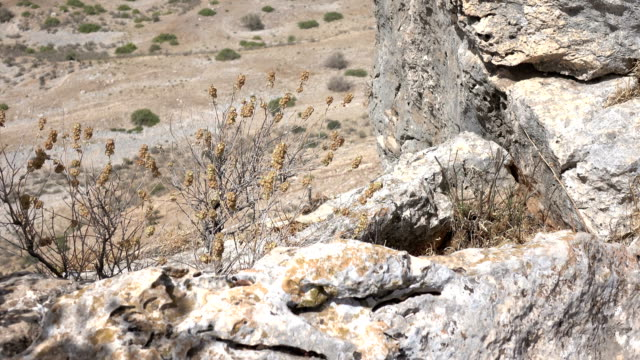 Dry Clump of Weeds on Side of Cliff in Israel video